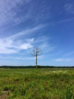 Last_tree_2016